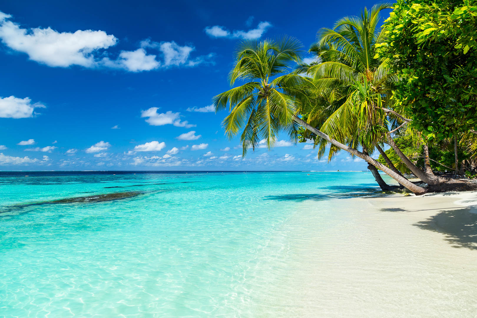 coco palms on tropical paradise beach with turquoise blue water